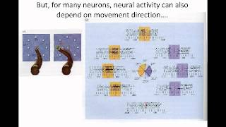 Lecture 11 -- Neurophys. of primary motor cortex