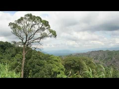 The rise of responsible forest management