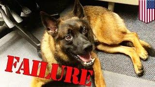 Duwag Na K9 Police Dog, Pinatalsik Mula Sa Police Dog Academy!
