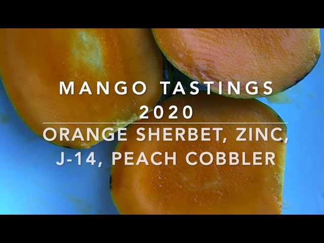 Florida Mango Tastings 2020:  Orange Sherbet, Zinc, J-14 and Peach Cobbler