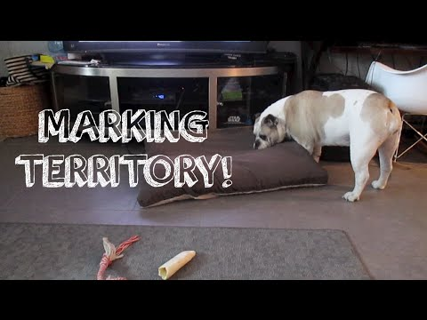 MARKING TERRITORY! (7.27.14 - Day 208)