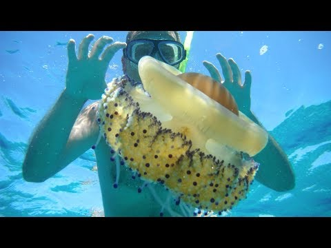 Swimming with a Jellyfish