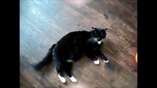2016  Питание кота с проблемами желудка