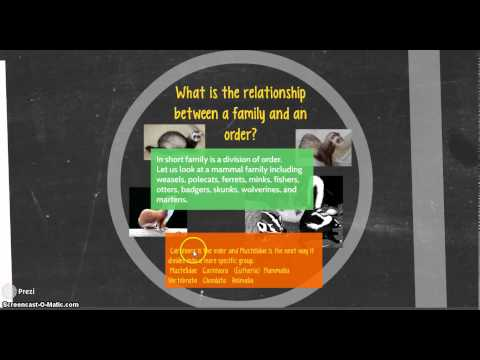 Classification: What is the relationship between family and order?