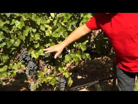 Summer at Diamond Creek Vineyards