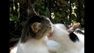 Кот и кошка французский поцелуй