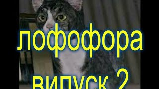 Лофофора для Gta San Andreas-Випуск-2-играем за кота