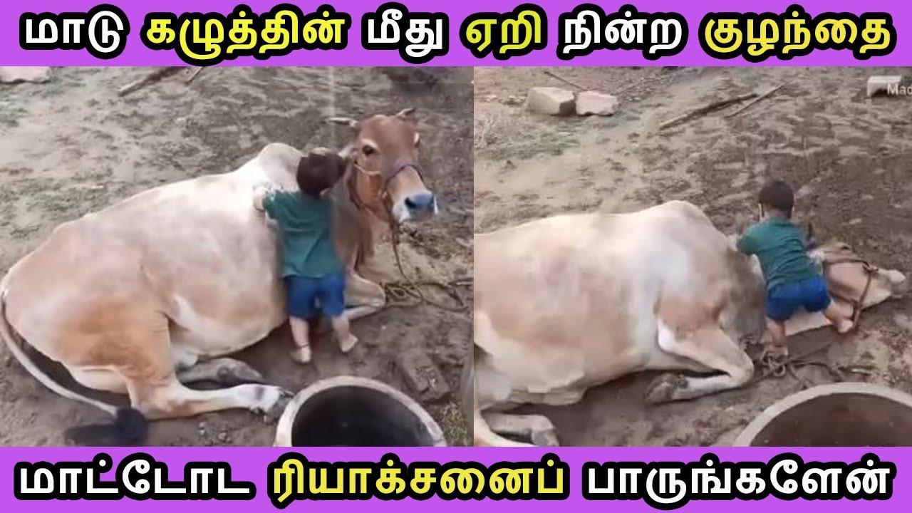 இணையத்தில் கோடிக்கணக்கானோர் பார்த்த ஒரு வீடியோ Tamil Cinema News Tamizh Thagaval