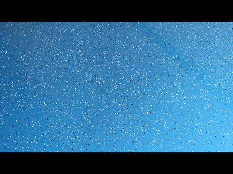 How To Apply Decorative Flakes To Urethane And Epoxy Floor Coatings