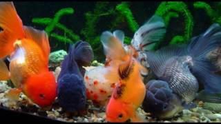 Необычные и смешные аквариумные рыбки