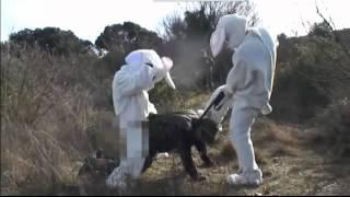 Hasen vergewaltigen Jäger (nqtv) thumbnail