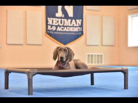Sophie (Weimaraner) Puppy Camp Dog Training Video Demonstration