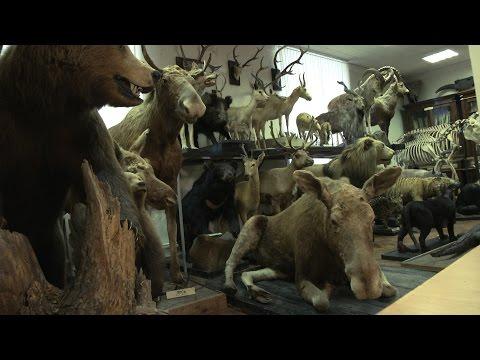 Зоологический музей Университета Лобачевского