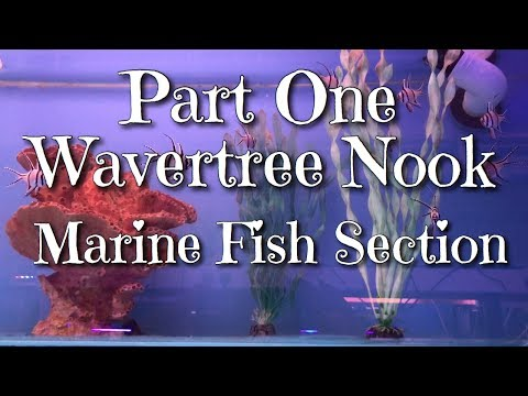 Part One Wavertree Nook Marine Fish Section