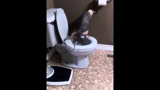 My sphynx taught himself to pee in the toilet