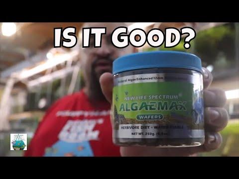 New Life Spectrum Algaemax! WILL THEY EAT IT?
