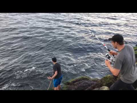 Blue Fish Plum Island MA