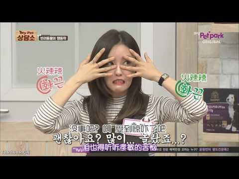 [CHN SUB] 151114 My Pet Clinic T-ARA Eunjung & Hyomin