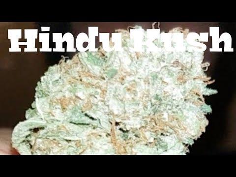 Canadian Cannabis Strain Review - Hindu Kush