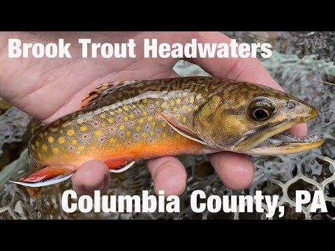 WB - Brook Trout Headwaters, Columbia County, PA - December '18