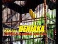 Aksi Kenari Denjaka Di Piala Andika Bjb Cup Omkicau(.mp3 .mp4) Mp3 - Mp4 Download