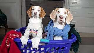Cute Dogs' Ugly Sweater Party: Cute Dogs Maymo & Penny thumbnail