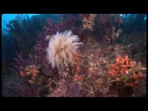 Mediterranean coral, a world of paradise