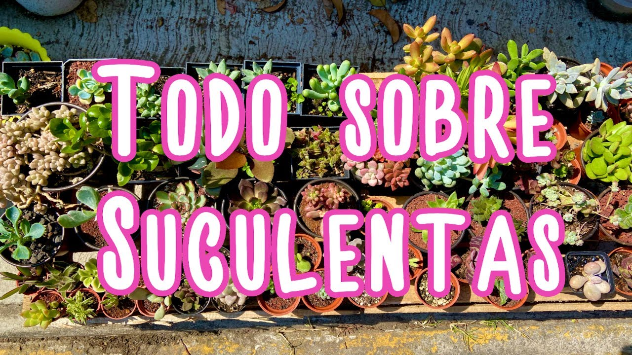 TODO SOBRE SUCULENTAS   *Nueva Temporada*   Maripily Pabe