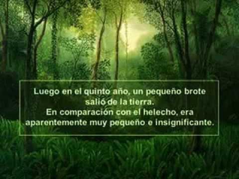 Hemorsa reflexion el helecho y el bamb youtube - Como se planta el bambu ...