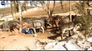 تلمسان: المازوت الجزائري مقابل الكيف المغربي والألواح لمواجهة الخنادق