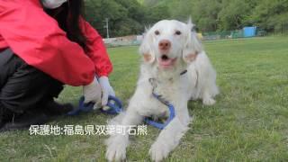 団体名:dogwoodわんにゃん災害支援 dogwoodでは、東日本大震災で被災し...