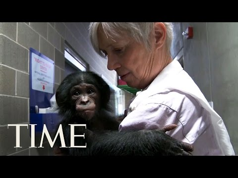 Bonobos: One Of Humankind's Closest Relatives & What They Can Teach Us | TIME