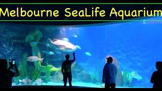 Melbourne Sea Life Aquarium like never before! AMAZING!!