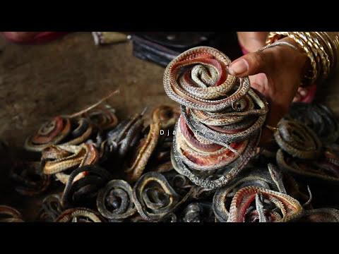 Snake Industri in Cirebon