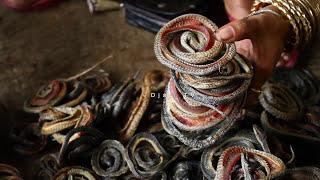 Snake Industri in Cirebon MP3