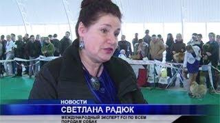 В Вологде прошла всероссийская выставка собак