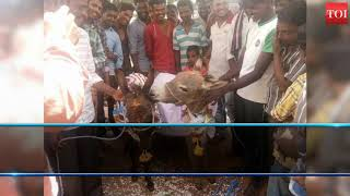 Mysuru villagers find lonely donkey a bride, priest officiates union
