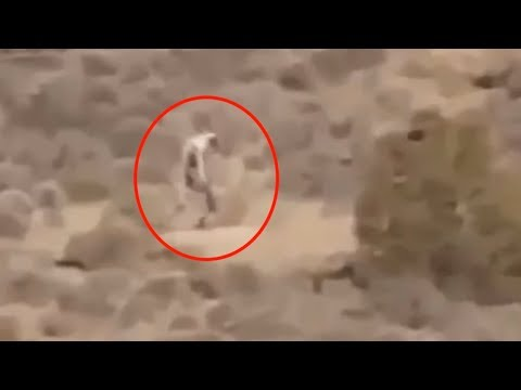 Thumbnail: 5 Mysterious Creatures Caught On Camera & Spotted In Real Life! #2