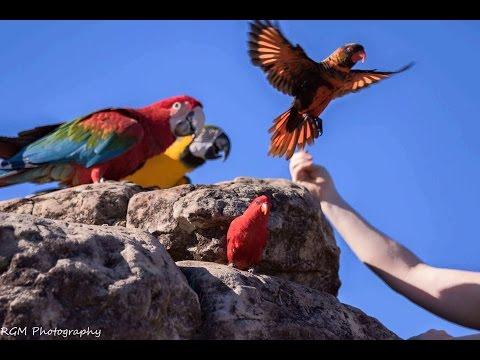 Free Flight Parrot Day 4