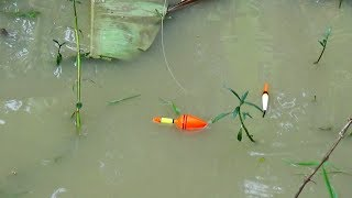 Best Fishing Video | Kids Fishing By Daily Village Life (Part-56)