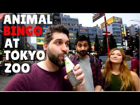 Animal Bingo At Tokyo's Ueno Zoo