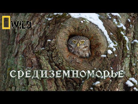 Дикая природа Средиземноморья. Мир природы дикие животные #Документальный фильм. National Geographic - Видео онлайн