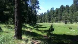 Cabin Loop Hike