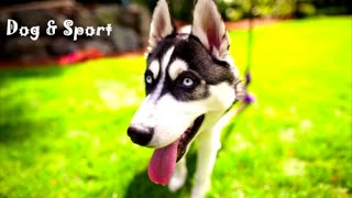 Dog Sport Compilation - funny dogs, energetic, happy dog, super games