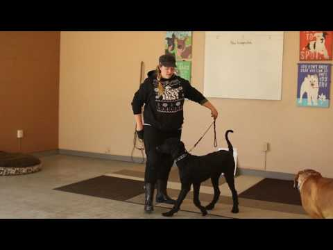Dogs Who Serve- Training a Pattern Interrupt for PTSD Service Dog- Ty the Dog Guy