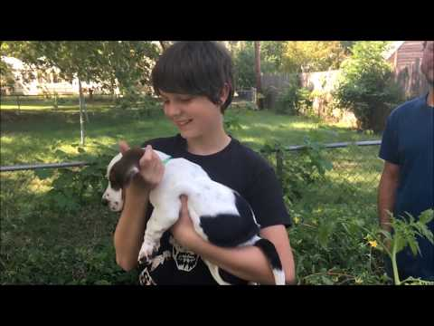 Surprising The Kids With A Puppy Basset Hound!