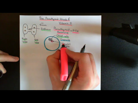 The Parathyroid Glands and Vitamin D Part 1