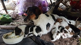 Dog mom nursing their cute babies, puppies video compilation 2020