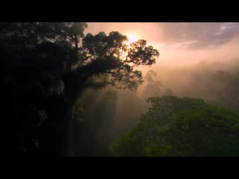 Nature Is Speaking – Kevin Spacey è La Foresta Pluviale (sub ita)