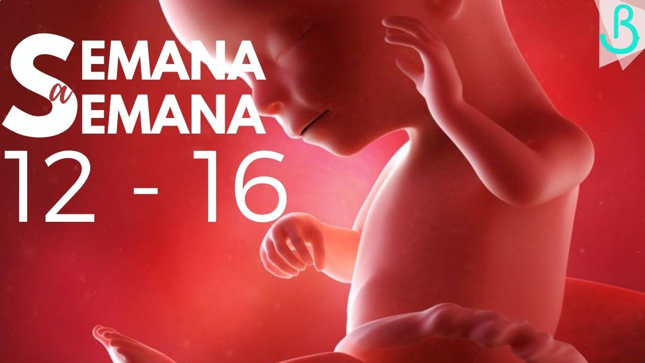 Semanas 12 16 De Embarazo 4 Meses Semana A Semana Baby Suite By Pau Youtube